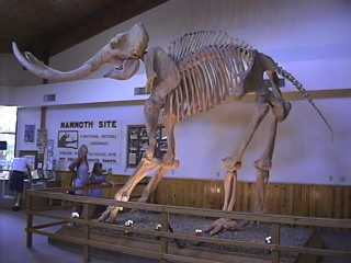 Columbian Mammoth Skeleton